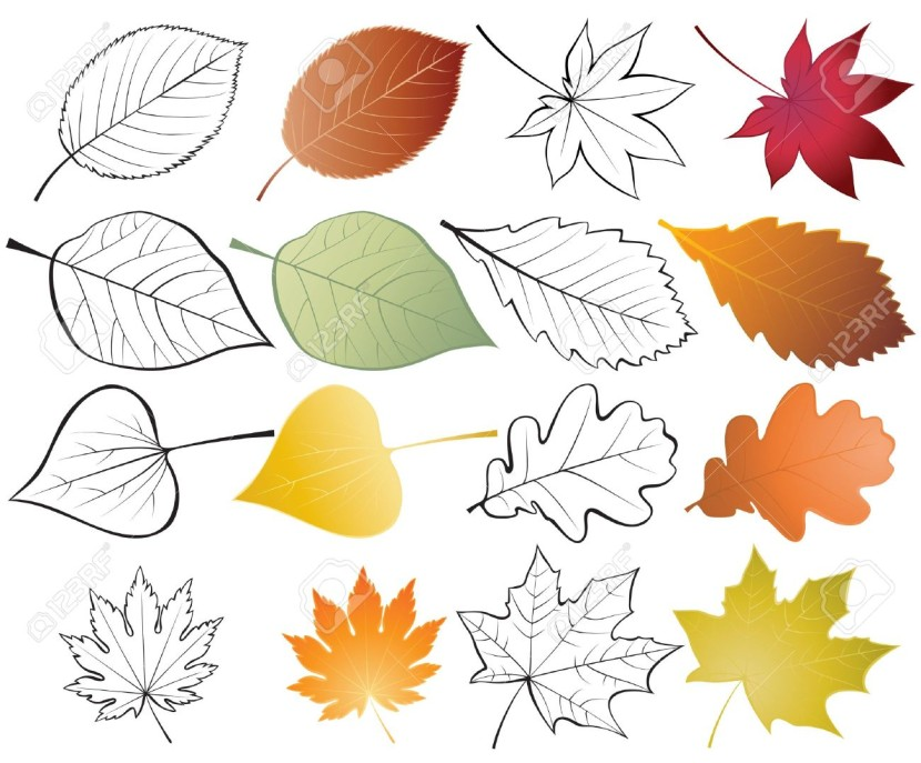 Set Of Leaves Color And Outline Illustrations Royalty Free