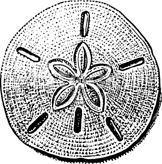 Free Clipart Sand Dollar Clip Art also 52 further Tribal Drawing additionally E5 A4 8D E5 8F A4 E6 89 8B E7 BB 98 E5 9B BE E7 89 87 moreover Piazza Del C o Siena 510345719. on outline of drawing and drawings