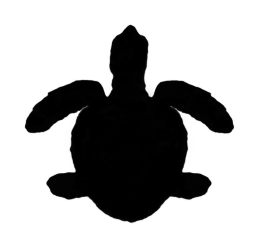 Silhouette Of Green Sea Turtle Chelonia Mydas Flickr Photo