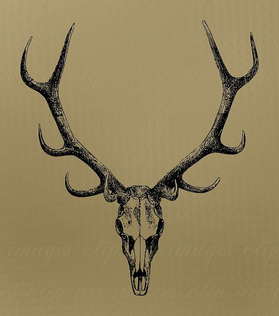 Skull Clip Art With Antlers Royalty Free No Credit Required