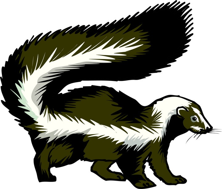 Clip Art Skunk Clip Art best skunk clipart 13863 clipartion com bar clipart