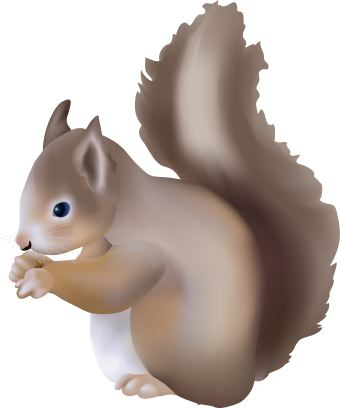 Squirrel Clipart Free Clipart Images