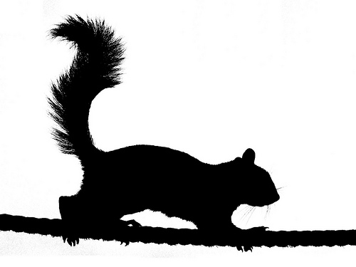 Squirrel Silhouette 2 Flickr Photo Sharing
