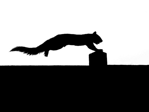 Squirrel Silhouette Running Flickr Photo Sharing