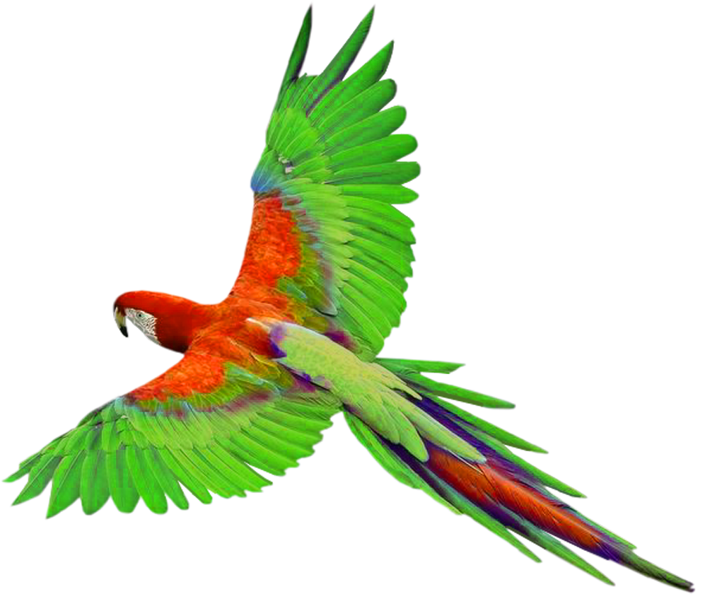 Talking Parrot Clipart Free Clipart Images