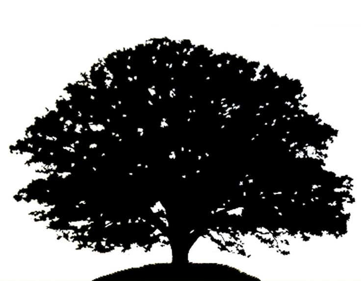 Tall Tree And Man Silhoette Tree Silhouette Oak Tree Invite