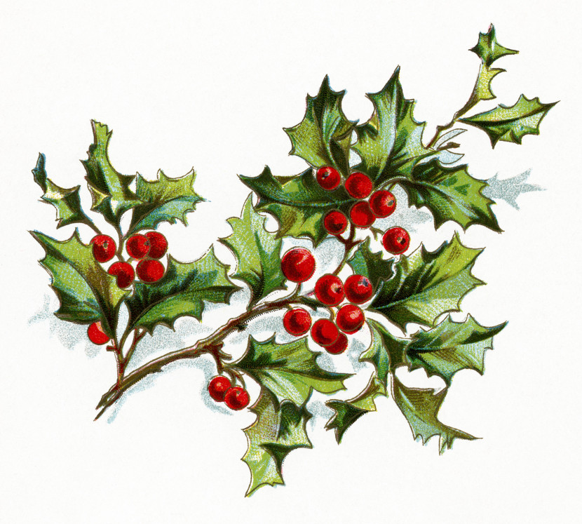 This Lovely Sprig Of Holly And Berries Is From A Book Poetry