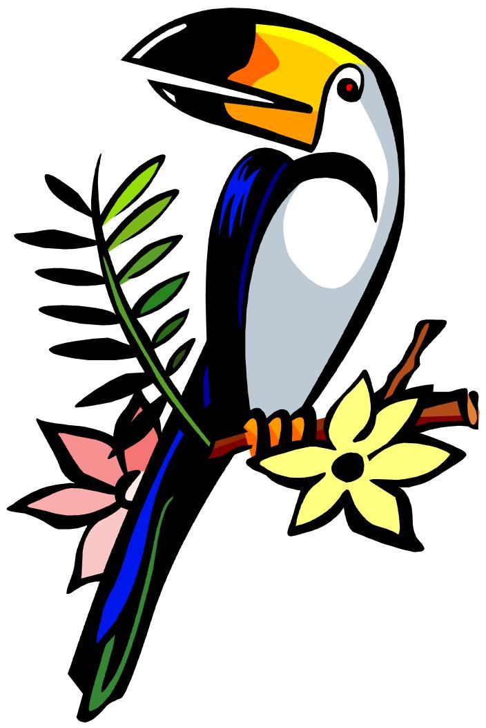 toucan clipart clipartioncom