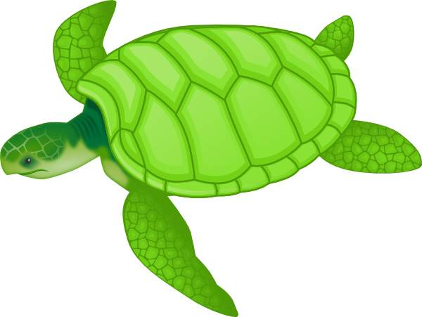 Turtle Clip Art Design Home Improvement Gallery