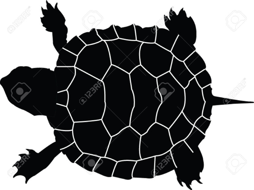 Turtle Silhouette Cliparts Stock Vector And Royalty Free Turtle