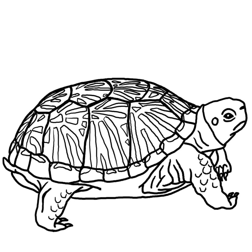 Best Turtle Clipart Black And White 12964 Clipartion