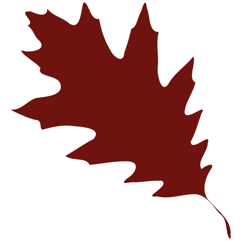 Vector Maple Leaf Silhouette For Your Design Clipart Free Clip