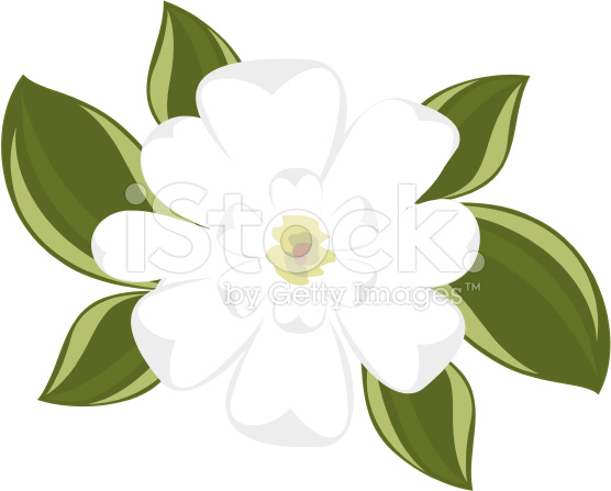 View Of Southern Magnolia Illustration Top Clipart Free Clip Art