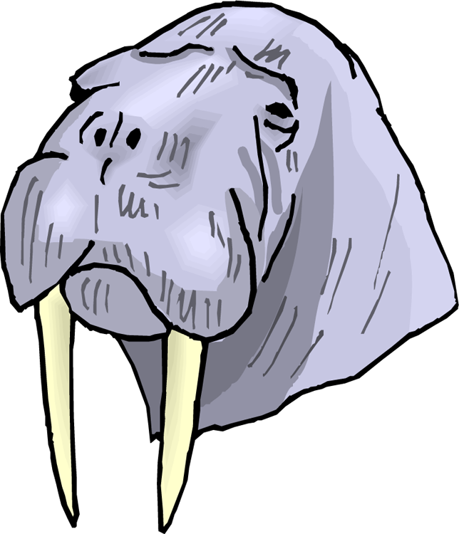 Walrus Face Download Clipart Free Clip Art Images