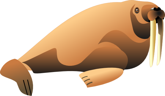 Walrus3 Png