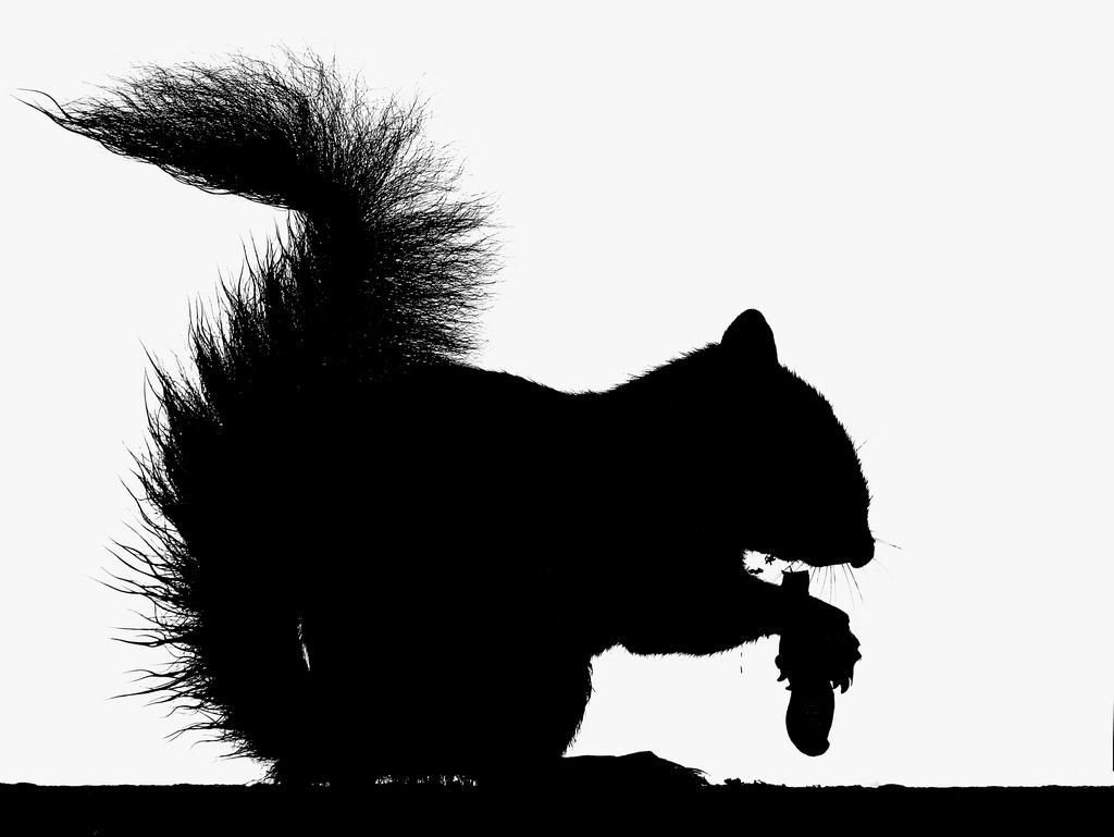 Squirrel Silhouette - Clipartioncom-1361