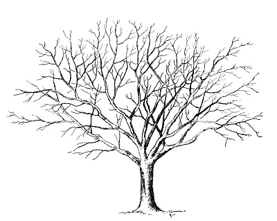 Winter Tree Clip Art Black And White 3