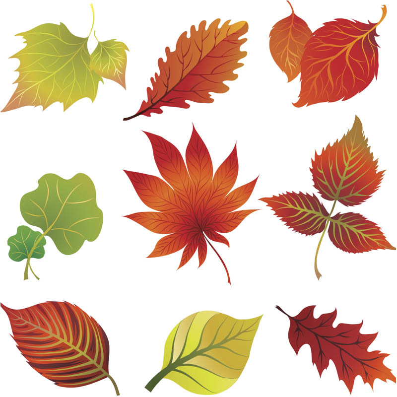 Fall Vector Graphics Blog Page 5