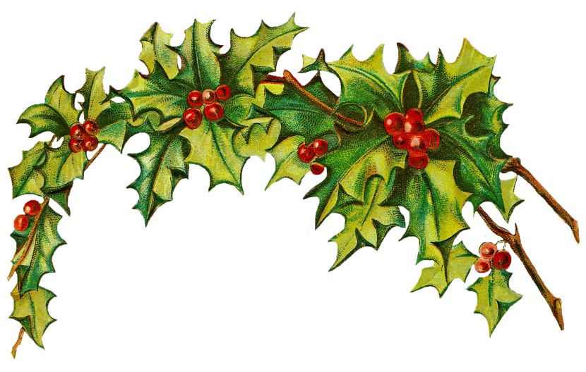 Holly Clip Art Free