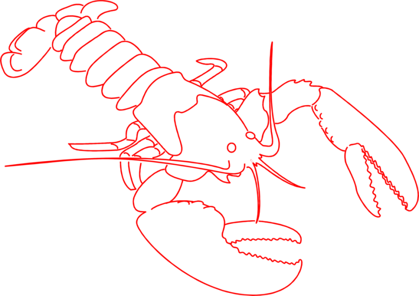 Lobster Outline Bing Images