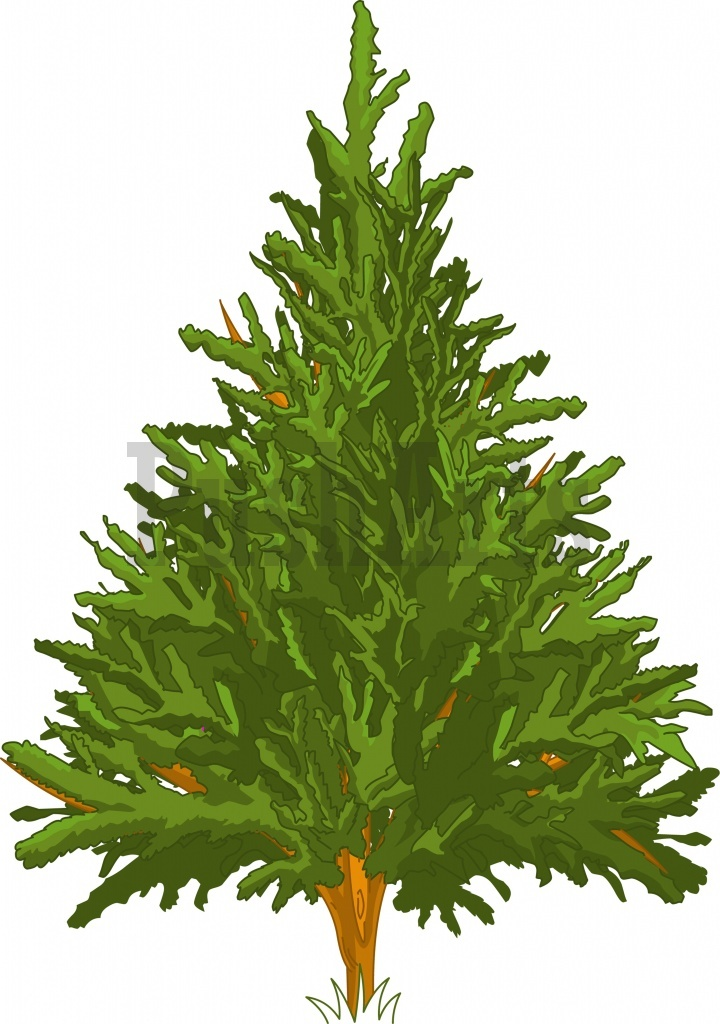 Pine Tree Pusharts Free Stock Illustrations Vectors