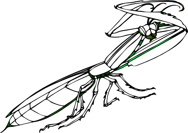 Praying Mantis Clip Art At Vector Clip Art Online