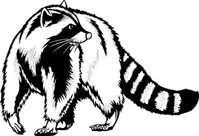 Raccoon Clipart - Clipartion.com Raccoon Face Clip Art Black And White