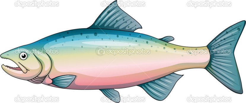 Rainbow Trout Stock Vector Interactimages