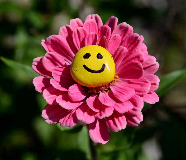 Smiley Face Flower Photos And Images For Facebook
