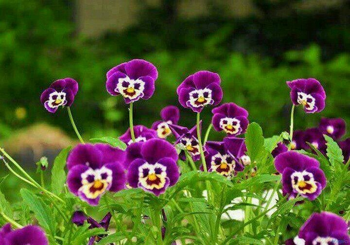Smiley Face Flowers Smile You\'ll Feel Better