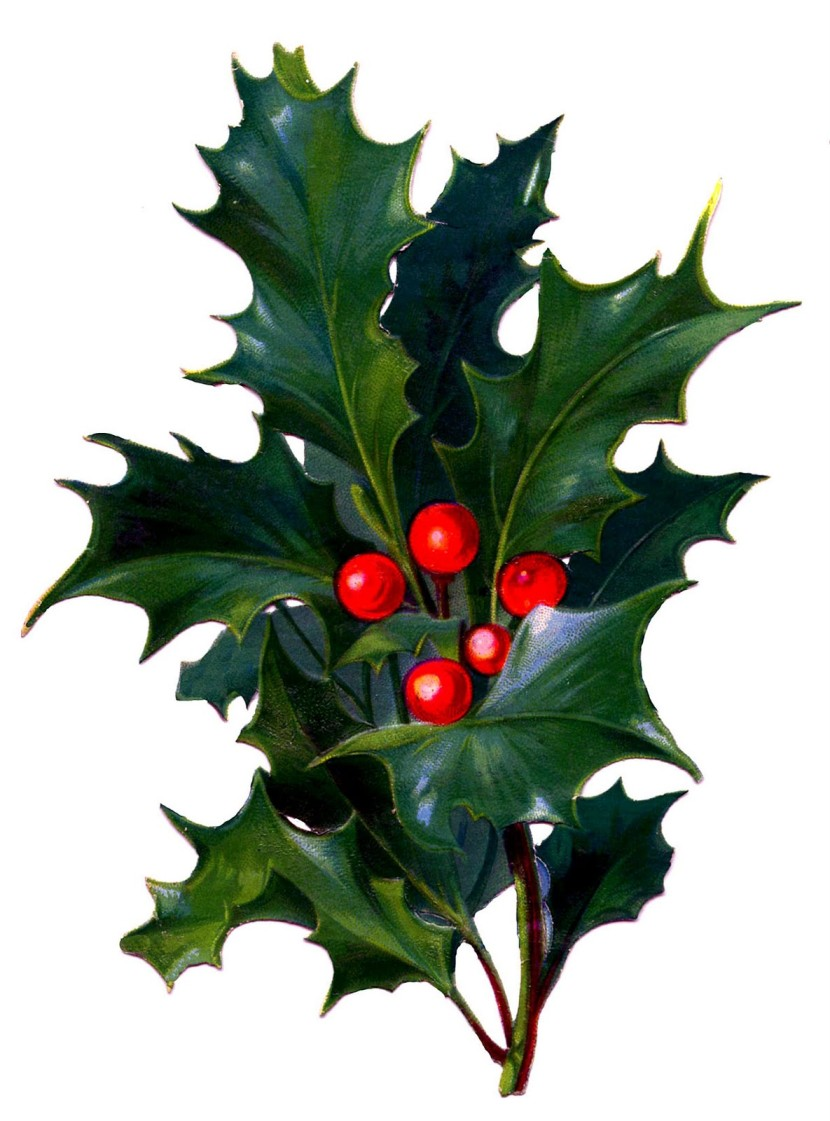 Victorian Christmas Clip Art Holly With Bright Red Berries The