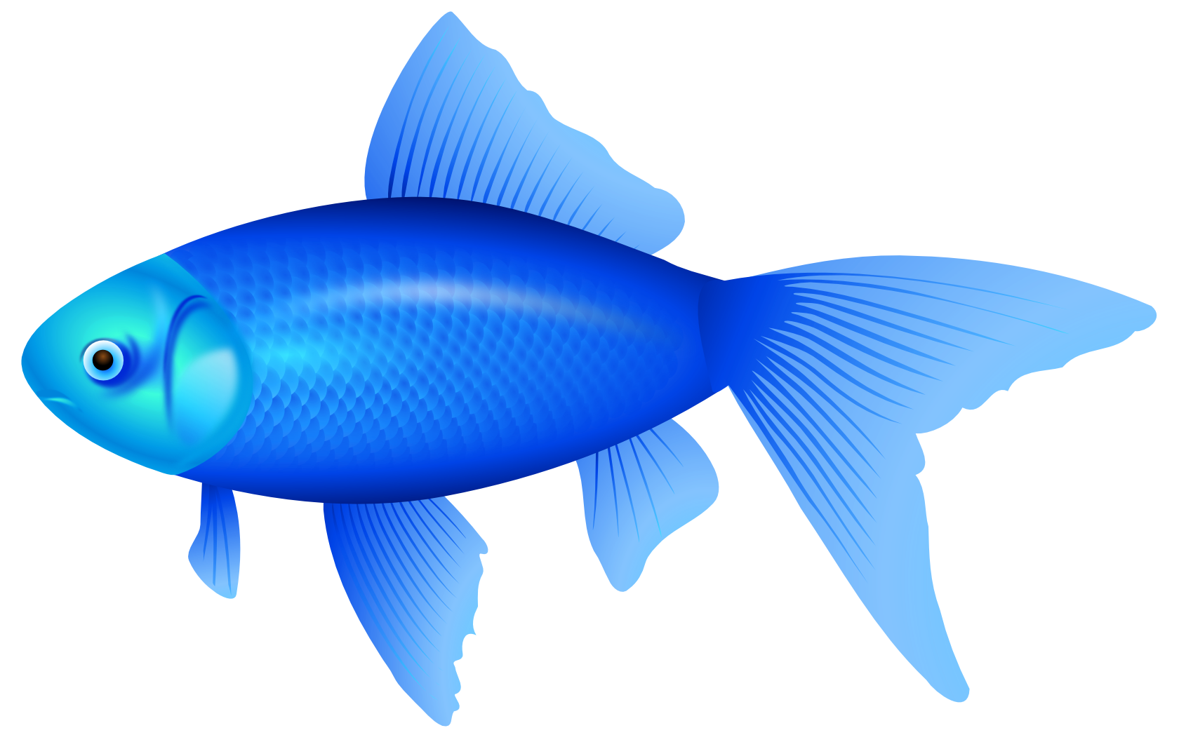 Best blue fish clipart 24751 for Fish clipart images