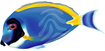 Best Blue Fish Clipart #14827 - Clipartion.com