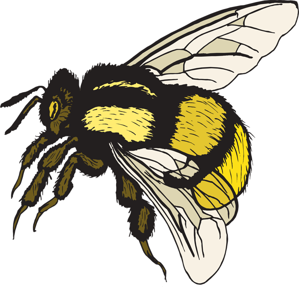 Best Bee Clipart #25625 - Clipartion.com