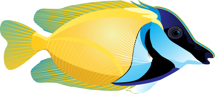 Best Fish Tropical Fish Clipart Free Clipartoons