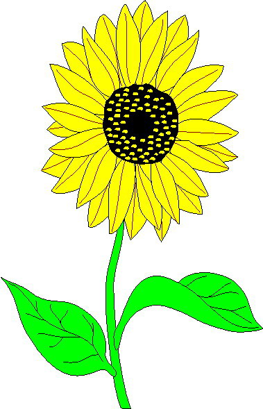 Best Sunflower Clipart
