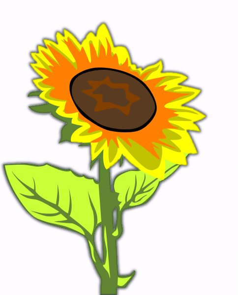 Free Sunflower Clipart Flower Images