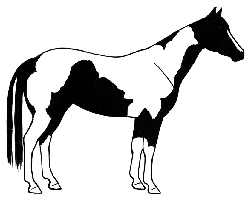Gallery For Free Paint Horses