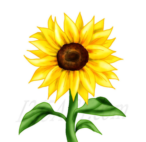 Best Sunflower Clipart #26347 - - 58.9KB