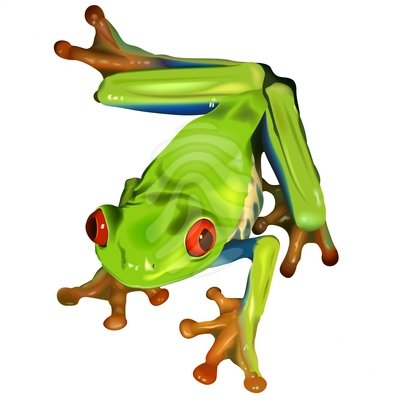 Tree Frog Black And White Free Clipart