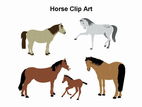 Horse Template