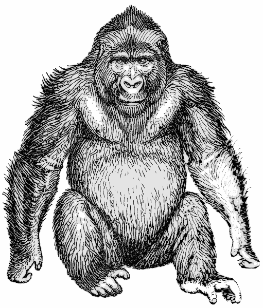 best gorilla clipart black and white #29891 - clipartion