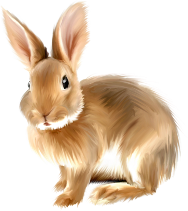 Bunny Clipart png